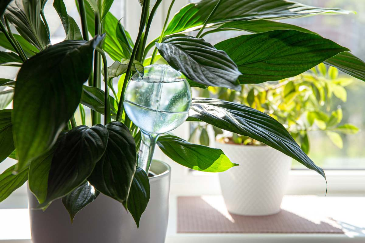 piante vacanze