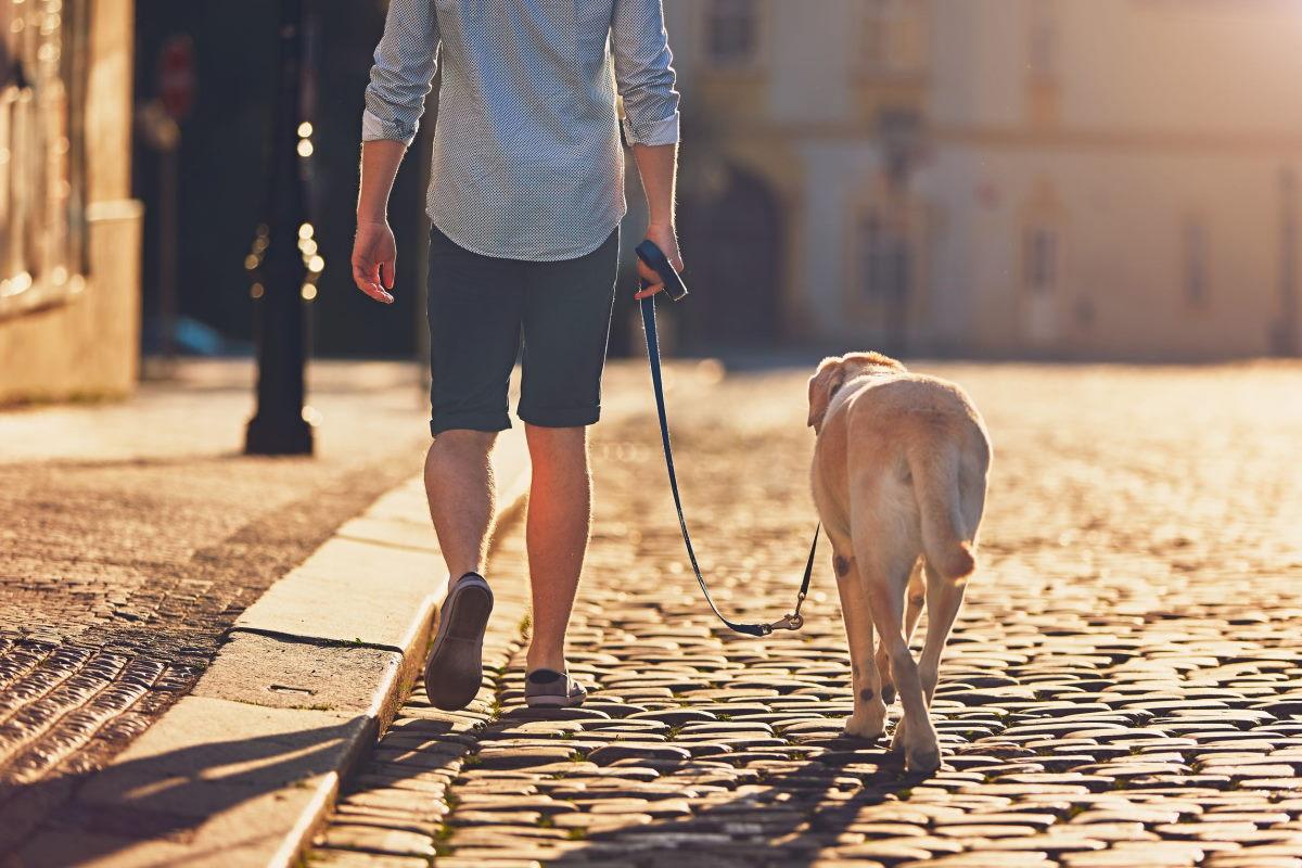 cane in piazza