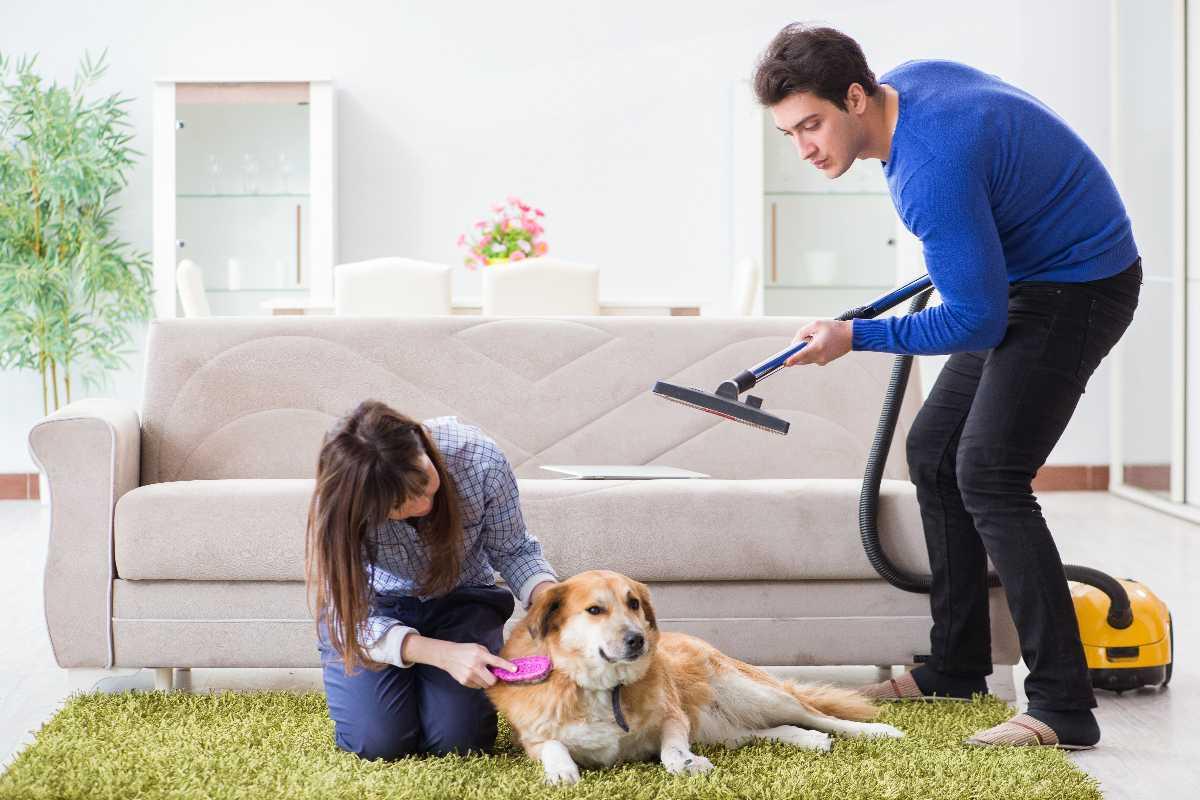 Cane pulizia casa