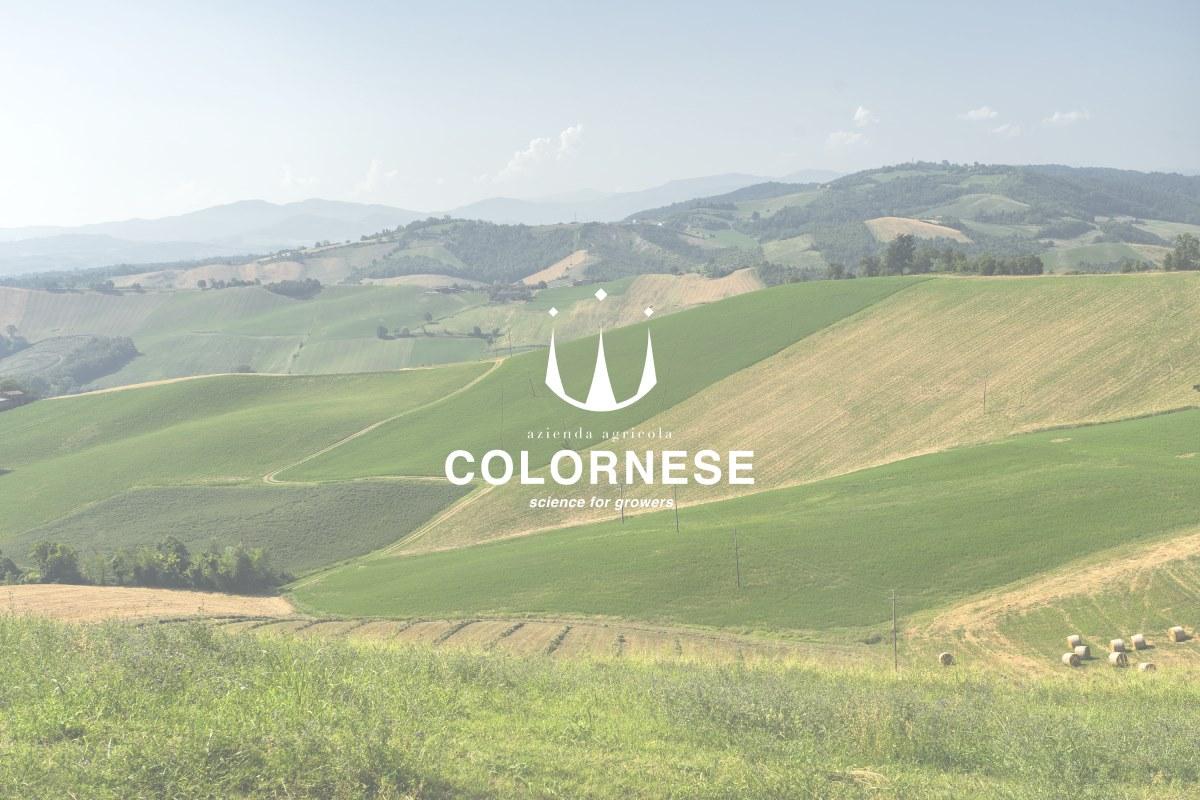 colornese cover