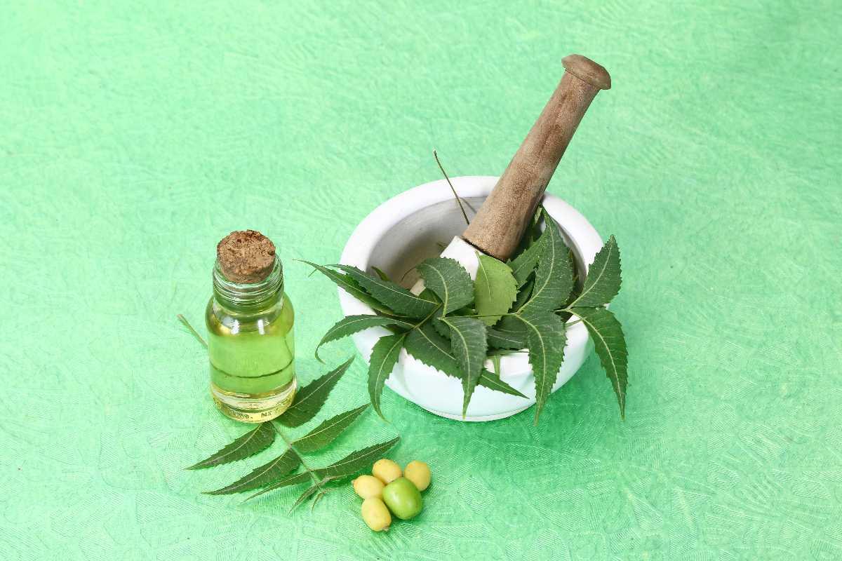 foglie di neem