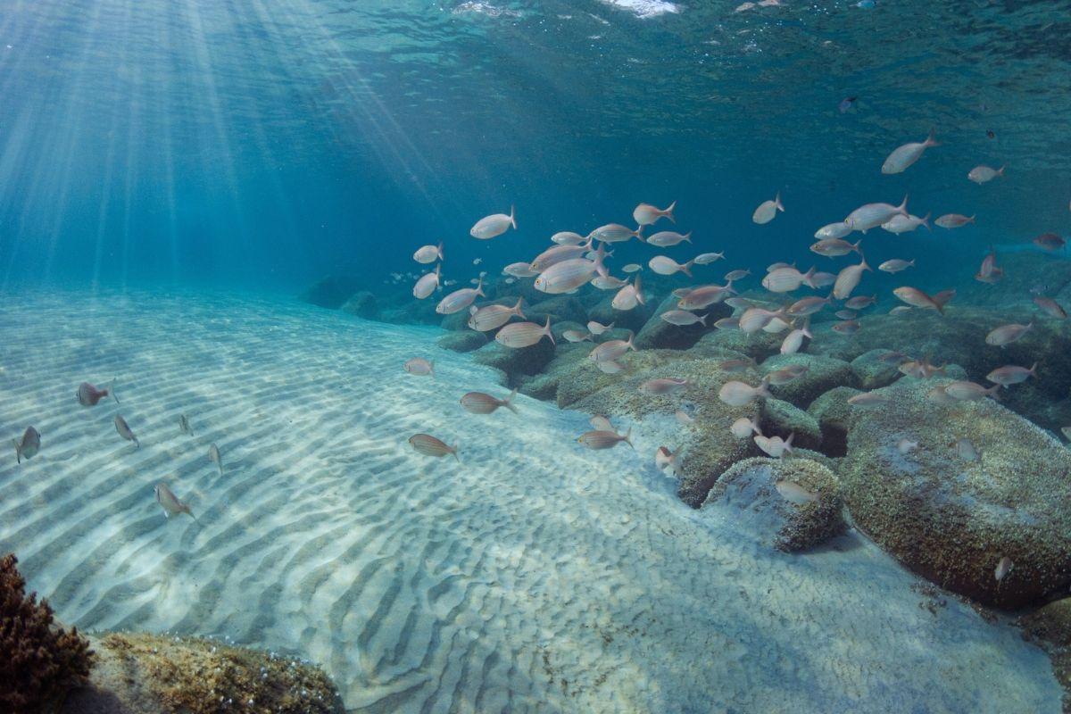 giornata internazionale mar mediterraneo