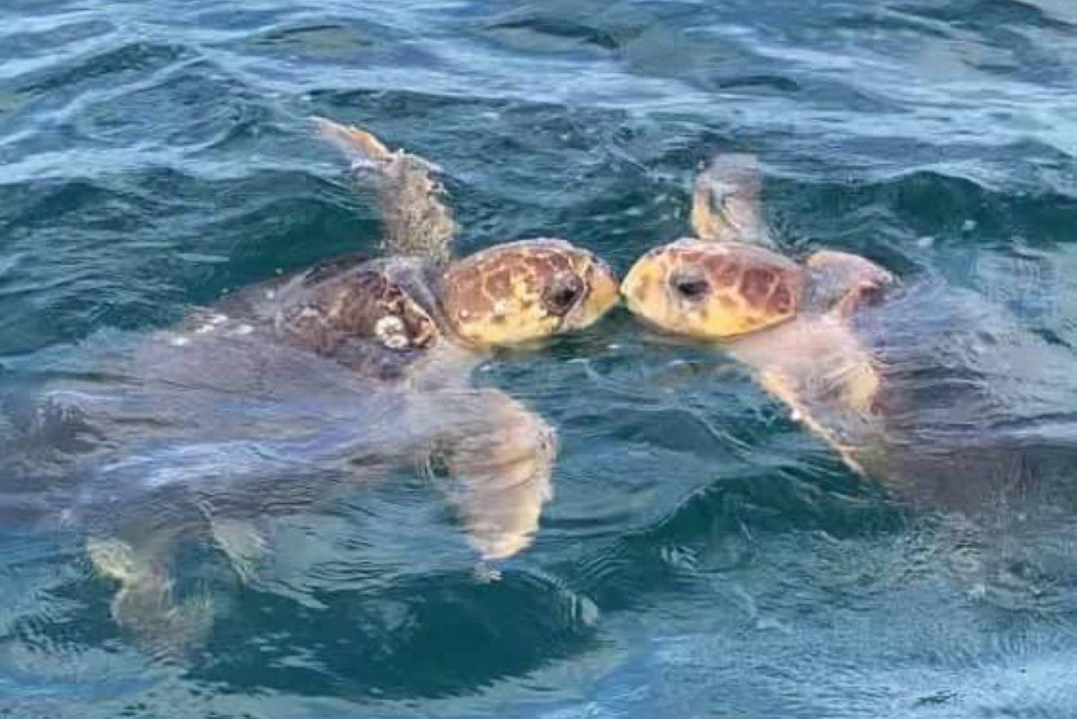 tartarughe bacio