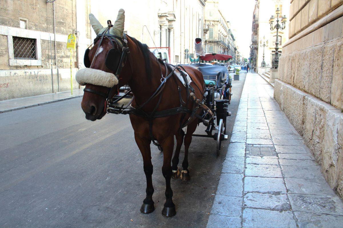 Carrozze Palermo