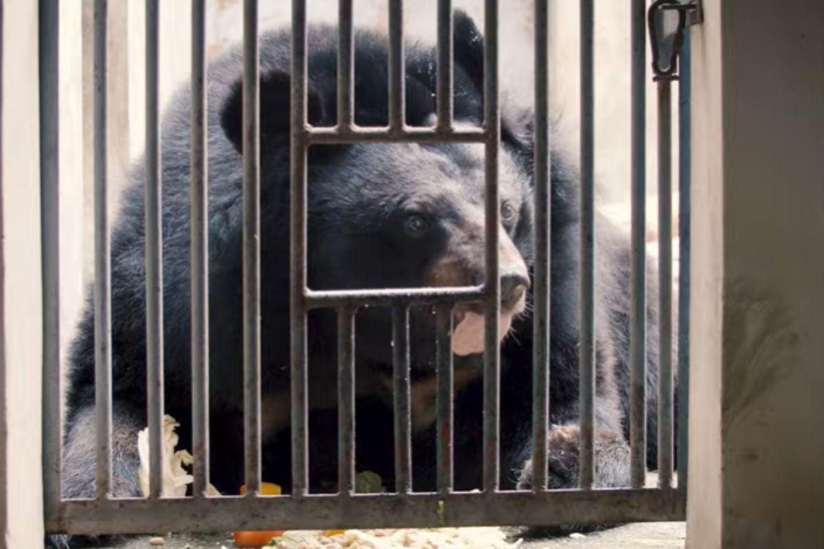 fattoria della bile orsi