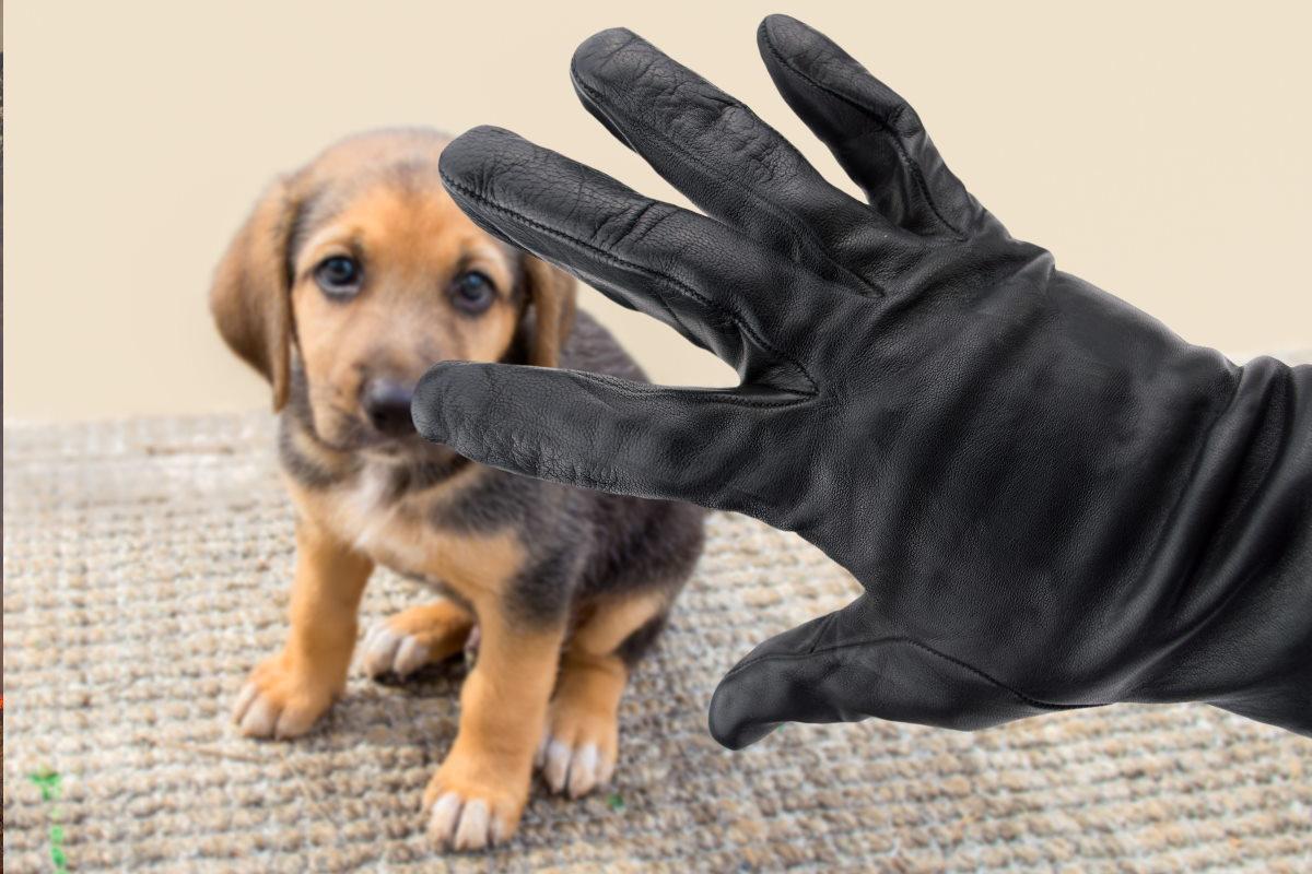 furti cani