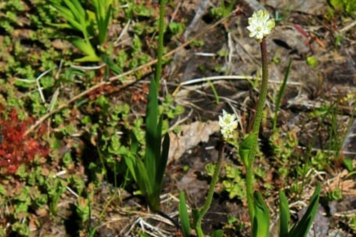 nuova specie pianta carnivora