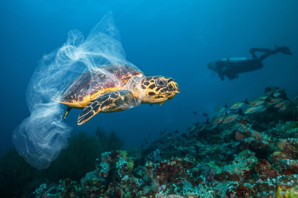 inquinamento plastica tartarughe marine