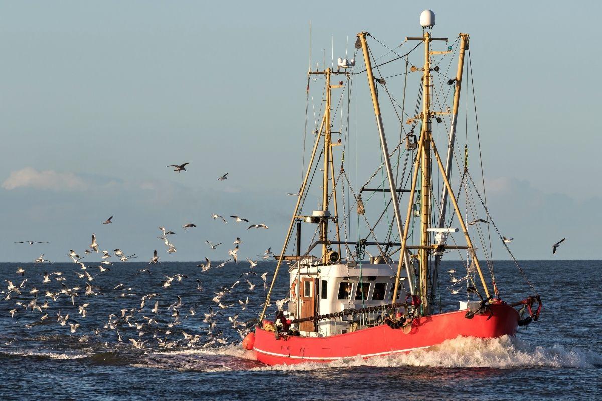 stop pesca coldiretti