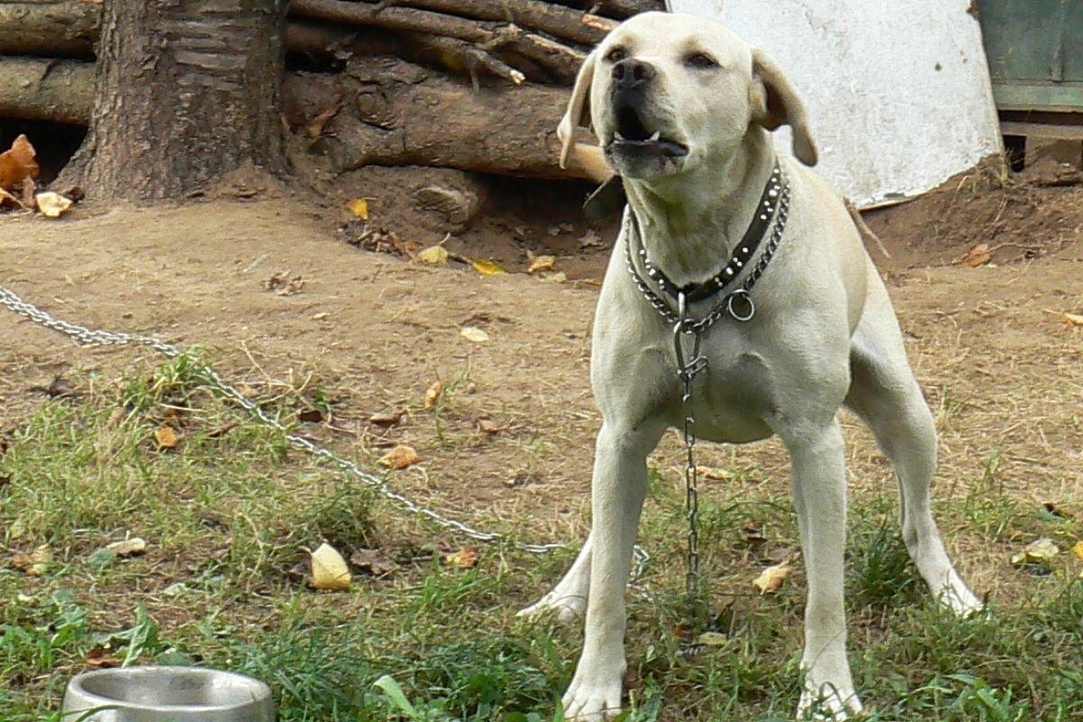 cane alla catena petizione piemonte