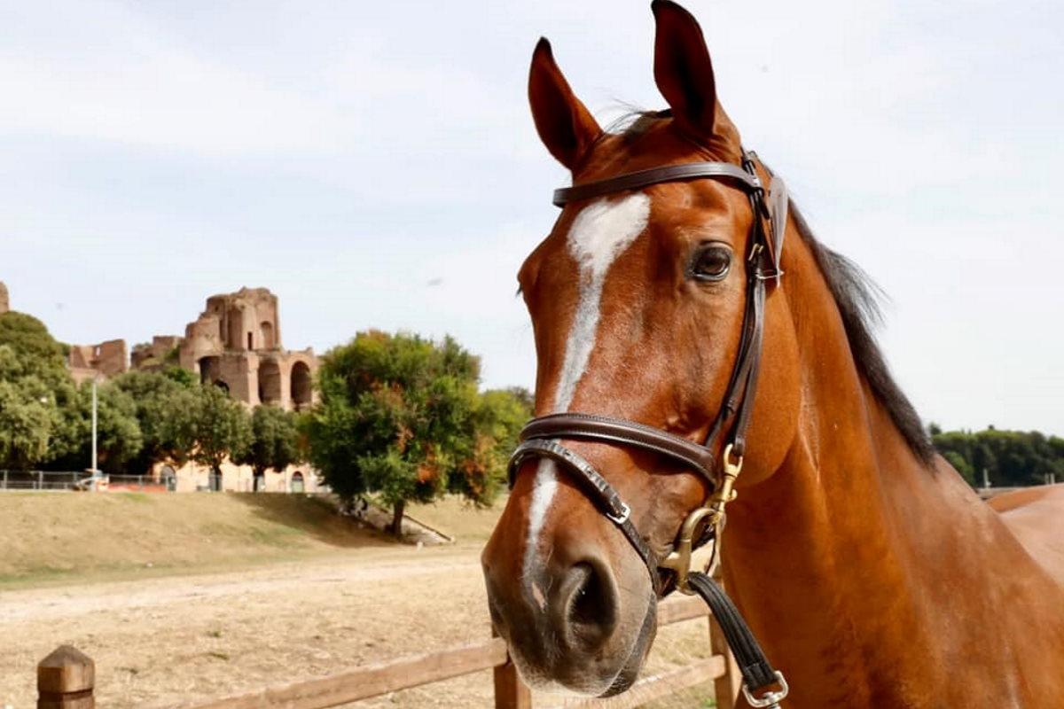 cavallo circo massimo