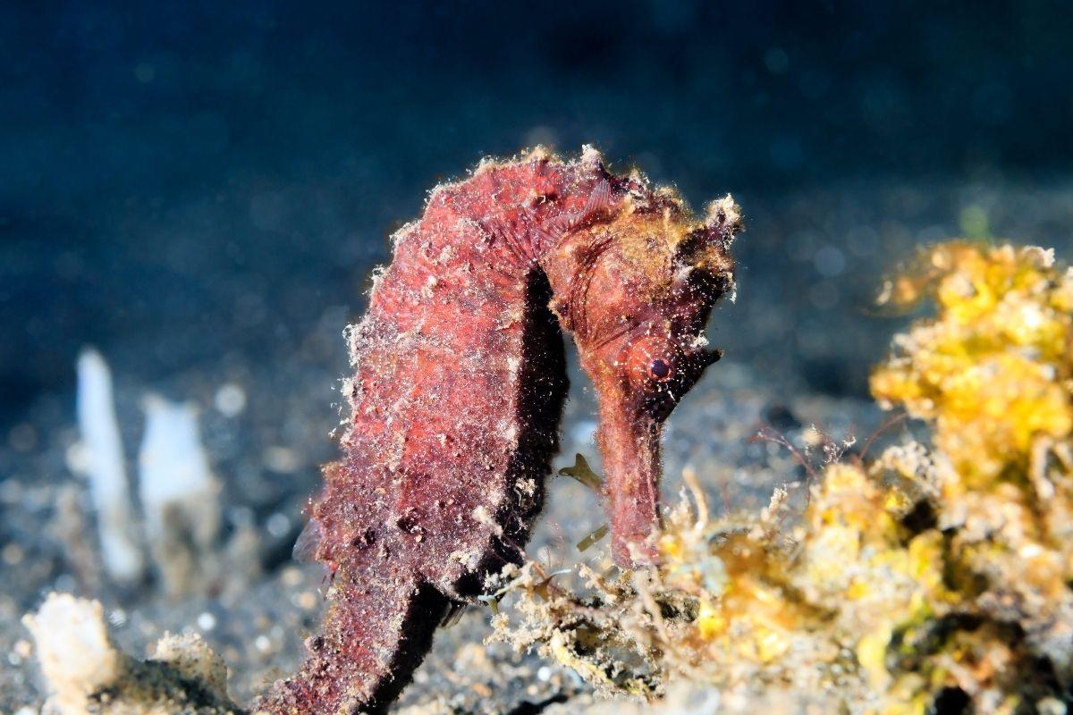 estinzione cavallucci marini taranto