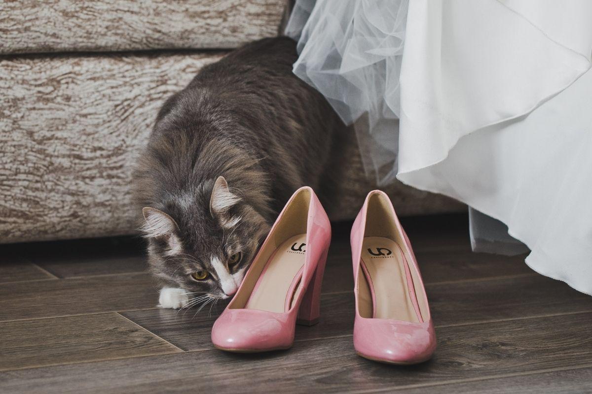 gatti oggetti con il nostro odore