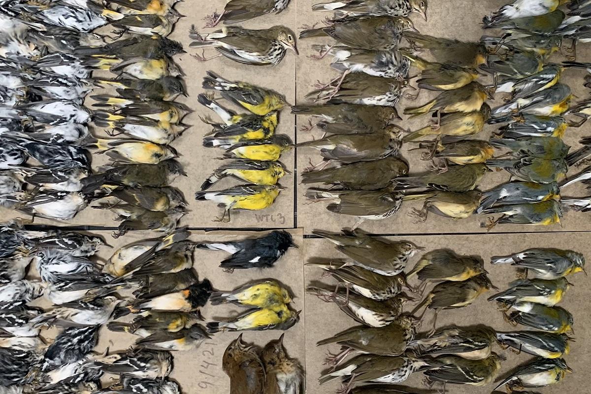 uccelli strage