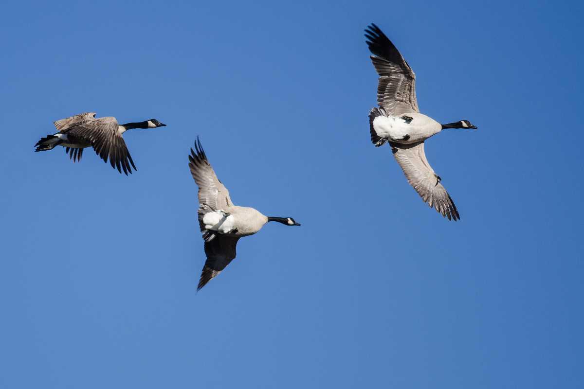 animali in volo