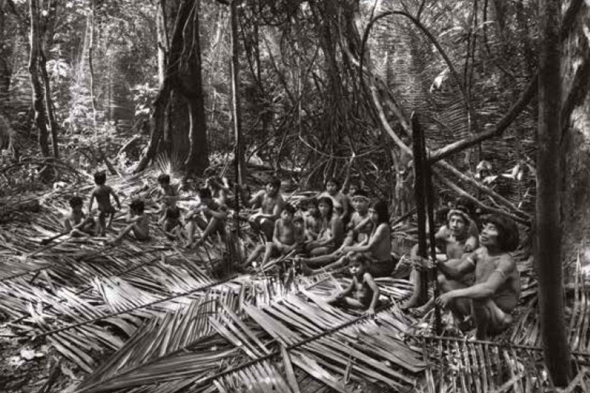 Mostra maxxi deforestazione amazzonia