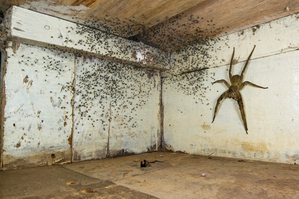 The spider room, by Gil Wizen