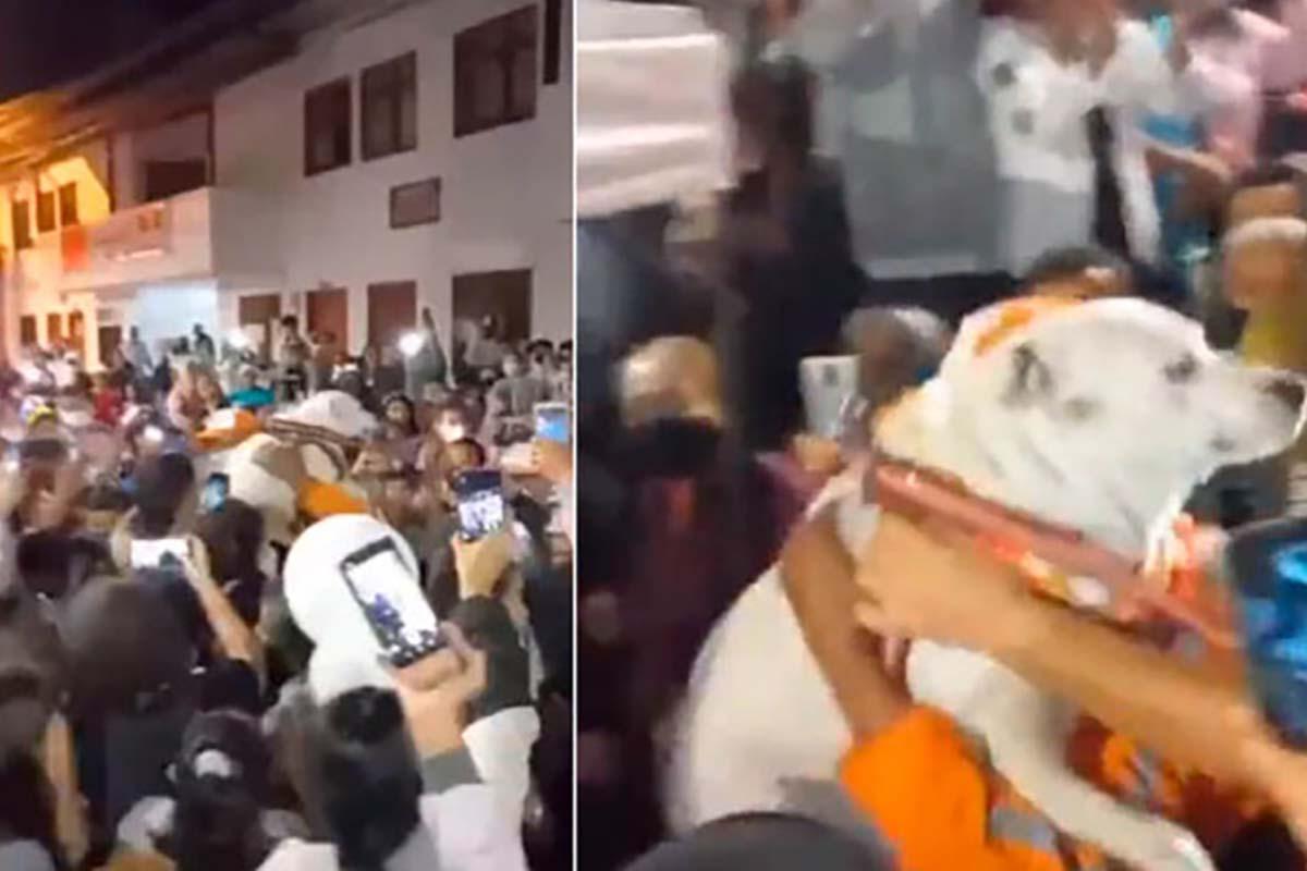 festeggiano ritorno a casa cane colombia