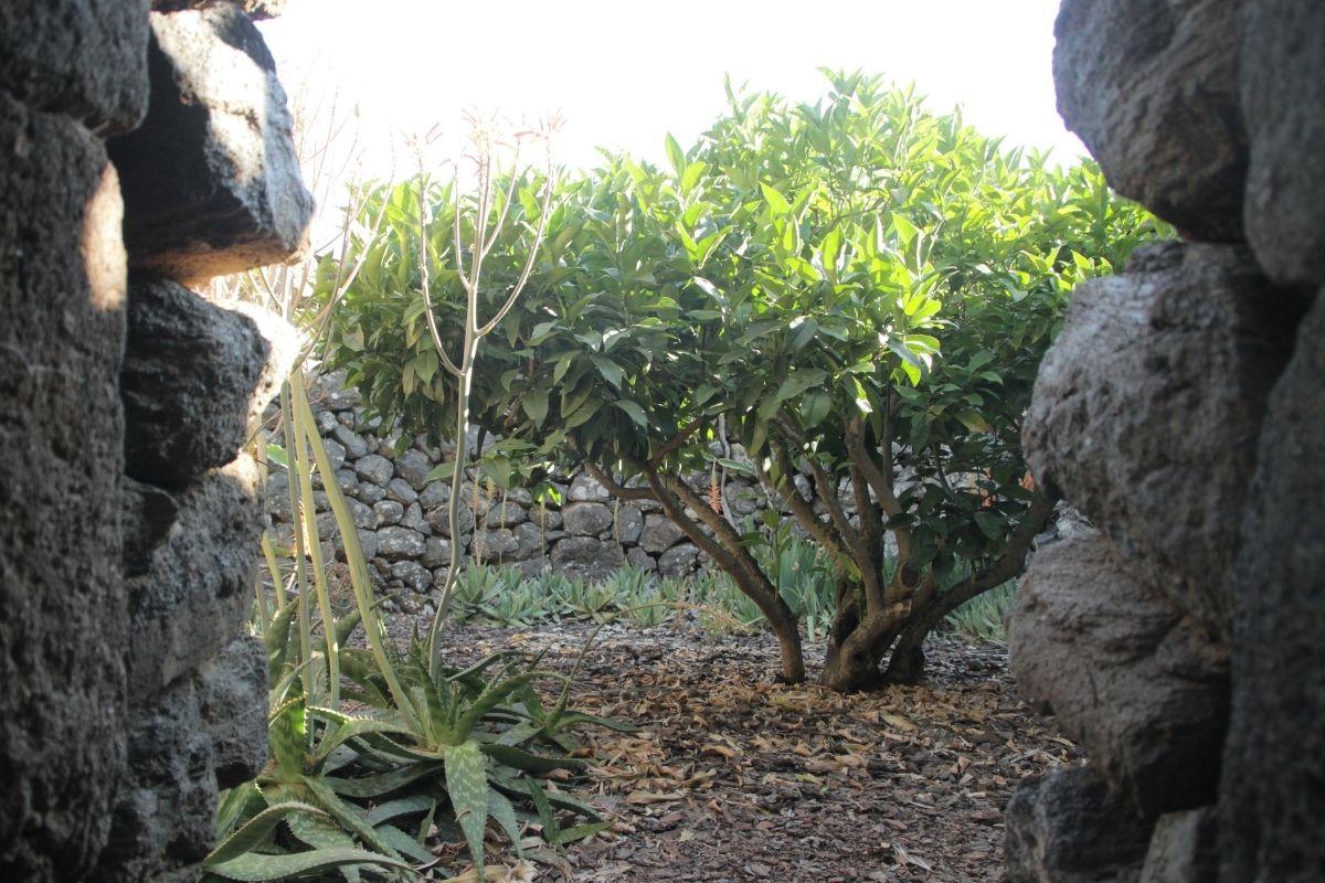 come realizzare giardino pantesco