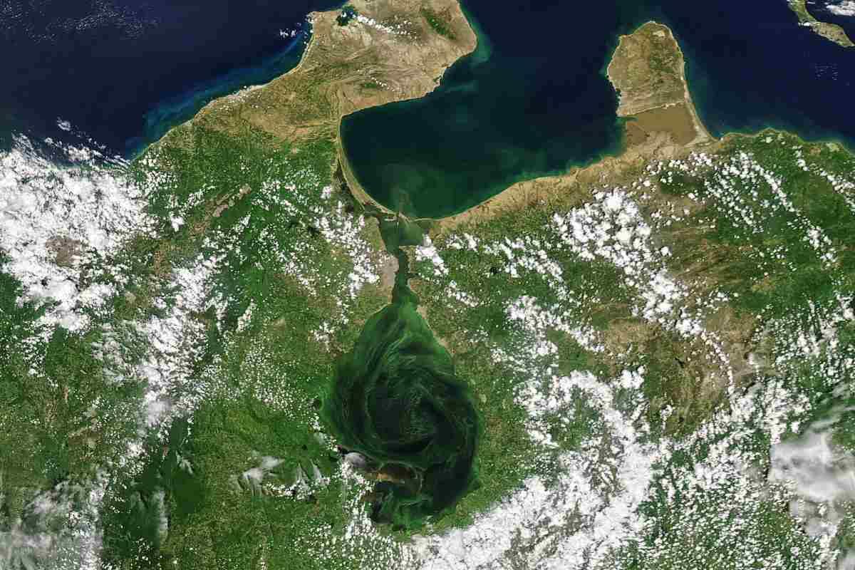 maracaibo alghe